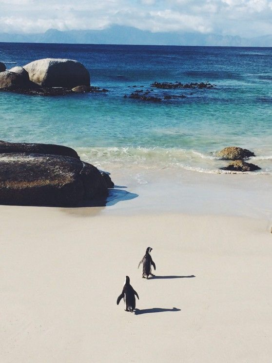 cape town south arfica one of the most beautiful places in the world