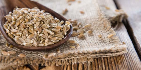 Farro #healthy living #belly fat #foods #trendypins