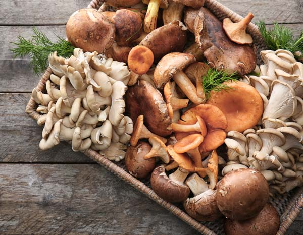 Mushrooms#healthy living #belly fat #foods #trendypins